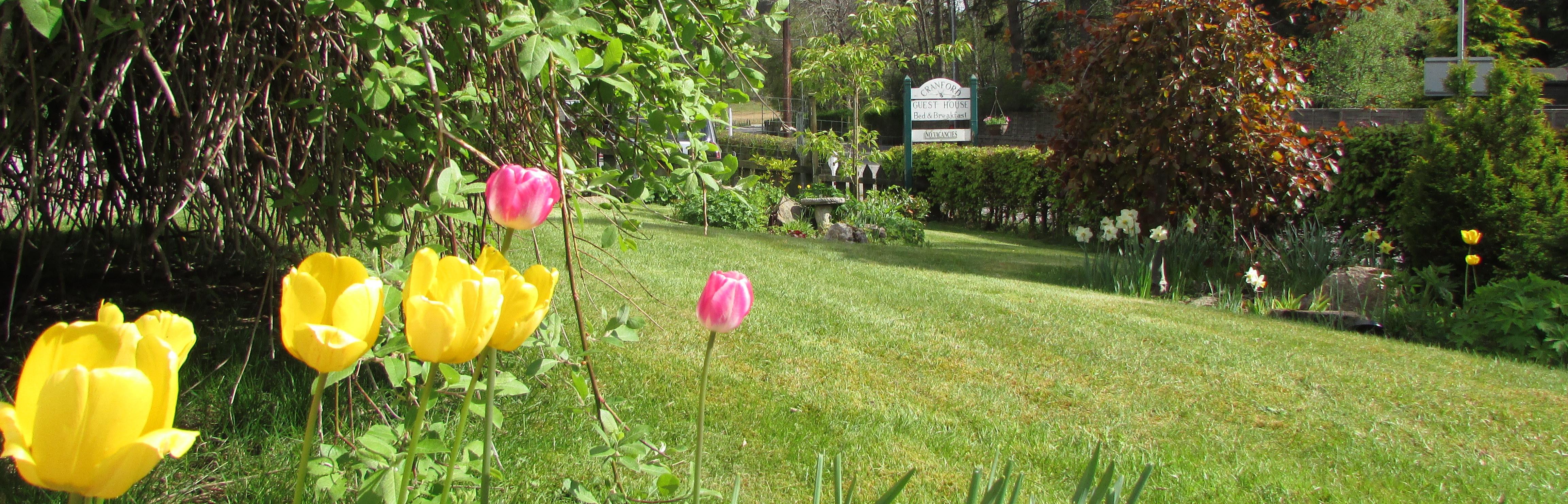 Cranford front garden